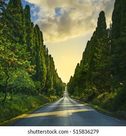 Bolgheri cypress trees straight boulevard landscape. Maremma landmark, Tuscany, Italy, Europe.