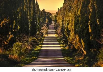 Bolgheri famous cypresses trees straight boulevard landscape. Maremma landmark, Tuscany, Italy, Europe.