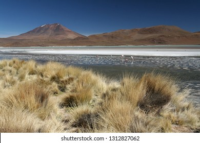 Bolivian Altiplano - high altitude plains in the Bolvian and Chilean Andes, home to flamingo and vicuna. Landscapes created by volcanoes (cones, geysers and lava) are incredible and otherworldly.
