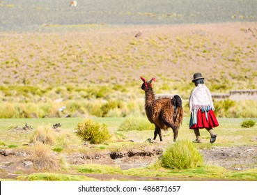 Bolivian woman in national costume and brown lama walking on the green field in Bolivia