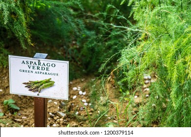 BOLOGNA, ITALY - OCTOBER 2, 2018: lights are enlightening Green Asparagus Signboard in the garden at FICO EATALY WORLD, the largest agri-food park in the world