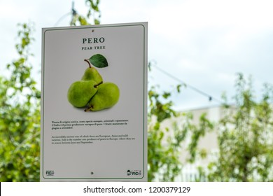 BOLOGNA, ITALY - OCTOBER 2, 2018: lights are enlightening Pear tree Signboard in the garden at FICO EATALY WORLD, the largest agri-food park in the world