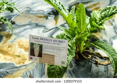 BOLOGNA, ITALY - OCTOBER 2, 2018: lights are enlightening white Ivory Cardoon Signboard in the garden at FICO EATALY WORLD, the largest agri-food park in the world