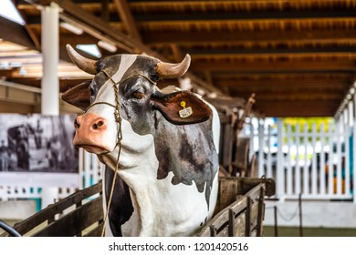 BOLOGNA, ITALY - OCTOBER 2, 2018: lights are enlightening statue of cow on cart at FICO EATALY WORLD, the largest agri-food park in the world