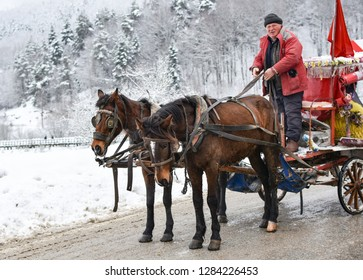 BOLU, TURKEY- JANUARY 13, 2019: Beautiful winter landscape with many snow and spruce trees. The Abant Lake Natural Park Karadeniz (Black Sea) Region with horse carriage. Holidays and outside activity.