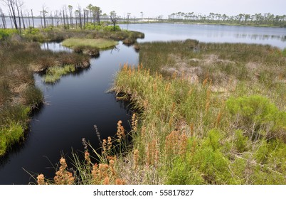 Bon Secour National Wildlife Refuge in Gulf Shores, Alabama
