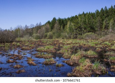 Bondarivske swamp protected by the ecological law of Ukraine