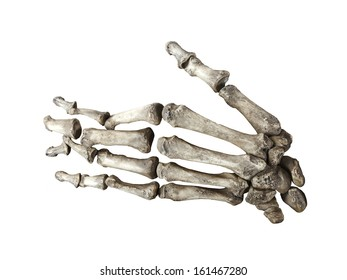 bone human hand isolated on white background