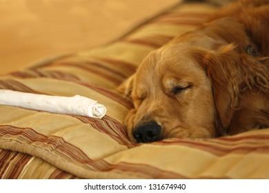Bone Sleep