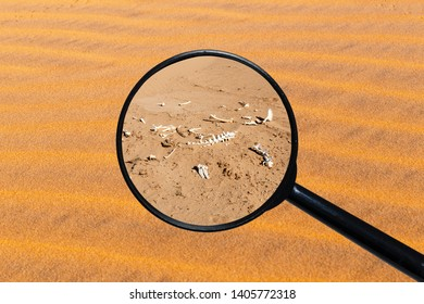 bones of an animal in the desert, view through a magnifying glass against the background of sand