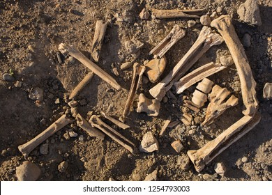 Bones of animals eaten by ancient people. The remains of cloven-hoofed animals.