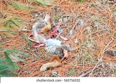 Bones of a rabbit