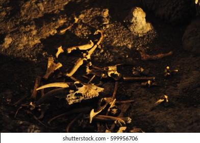 Bones in the Waitomo caves, New Zealand