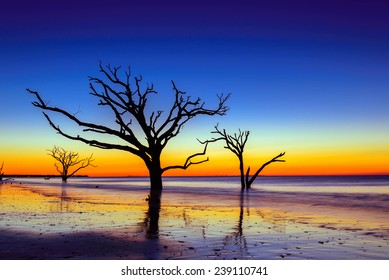 The boneyard at Botany Bay during sunrise on Edisto Island, South Carolina. The vivid colors of the sky and sun created an intense scene for the eyes.