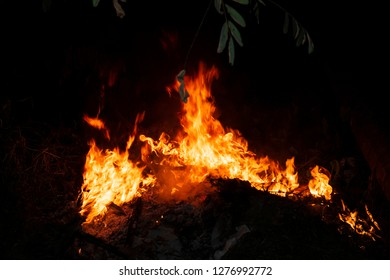Bonfire burning garbage and birch wood at deep night.