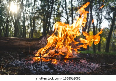 Bonfire in the forest. Camping fire background. Bonfire in the autumn forest. Bright marching fire with flame. Summer campfire.  - Shutterstock ID 1858062082
