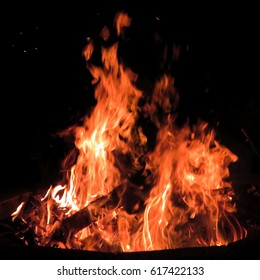 Bonfire in a forest of Mclean, USA, March 24, 2017