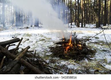 Bonfire in Spruce Tree Forest in winter