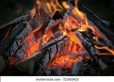 Bonfire in a wood in the evening