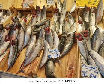 Bonito fish (Palamut) in fish market, İstanbul