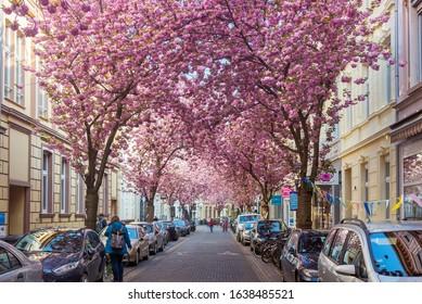 BONN, GERMANY- APRIL 15, 2019: Cherry blossom street in Bonn, Germany