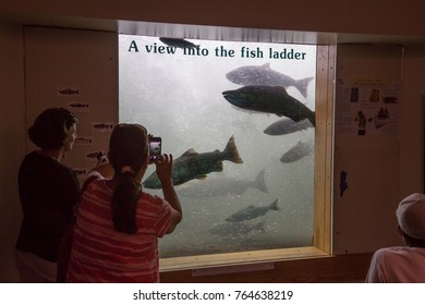 Bonneville Dam, Oregon - 9/20/2014:  Fish viewing window at Bonneville Dam.  Tourist are looking at salmon as they swim through the fish ladder.