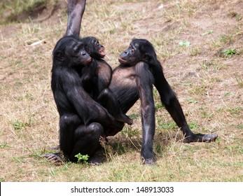 Big gorilla haveing sex thanks for