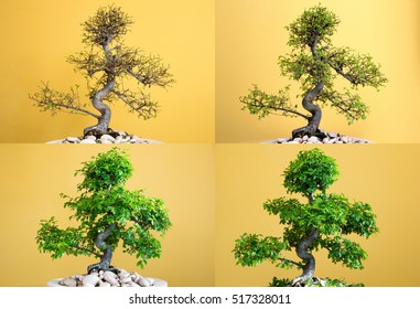 Bonsai art - growth in seasons - spring - four seasons, nature cycle