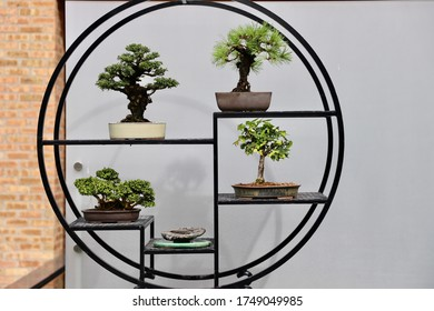 Bonsai collection on circular display
