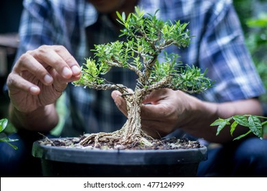 bonsai with the gardener