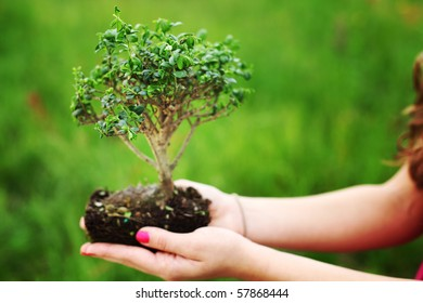bonsai in hands