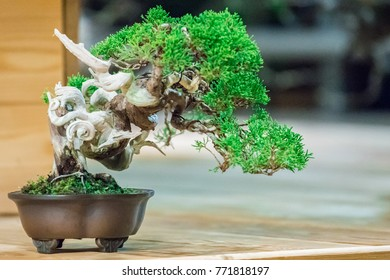 Bonsai  - Japanese art form using trees grown in containers, small, dwarfy trees