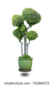 Bonsai in a jar separate from the white background.