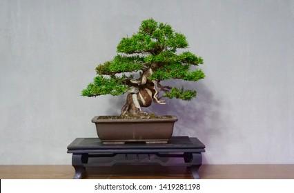 Bonsai is living art hobby