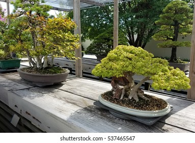 Bonsai and Penjing landscape with miniature trees in trays