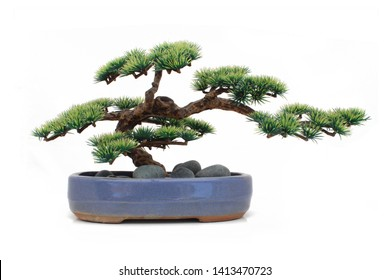 Bonsai in a pot isolated on white background (dummy bonsai)
