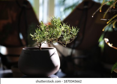 Clay Bonsai Pot High Res Stock Images Shutterstock