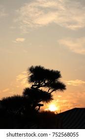 bonsai sunset - Japanese