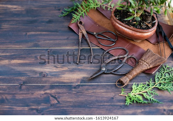 Bonsai tools set on wooden background. Image with selective focus