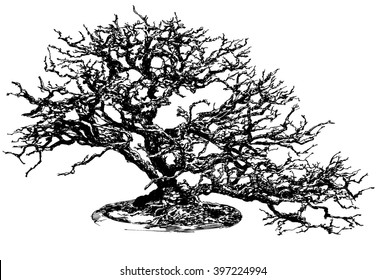 Bonsai tree. Black and white dashed style sketch, line art, drawing with pen and ink. Retro vintage picture.
