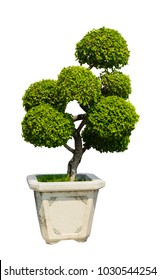 Bonsai tree, Dwarf tree in flowerpot isolated on white background with clipping path
