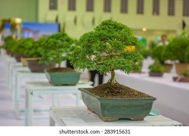 Bonsai Tree Exhibition Images, Stock Photos & Vectors