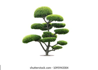 bonsai tree in garden isolated on white background
