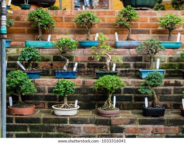 Bonsai Tree Indoor Garden Stock Photo (Edit Now) 1033316041