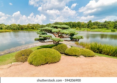 Bonsai tree in the Japanese Garden at Chicago Botanic Garden, Illinois, USA