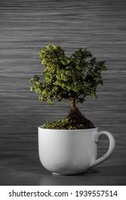 bonsai tree in a mug