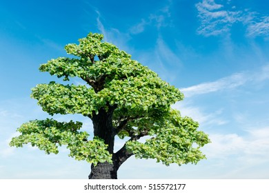 Bonsai tree on Sky background