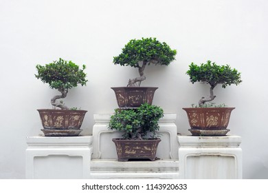 Bonsai trees in clay pots on display