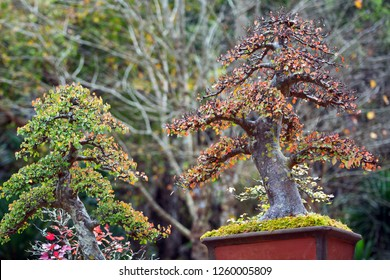 Bonsai trees in the park.