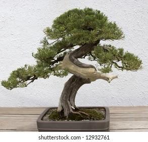 Twist Bonsai Tree Hd Stock Images Shutterstock
